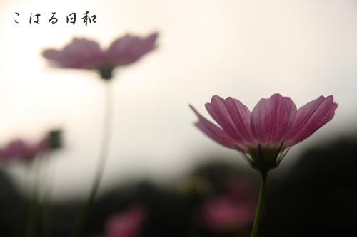 aki09.JPG