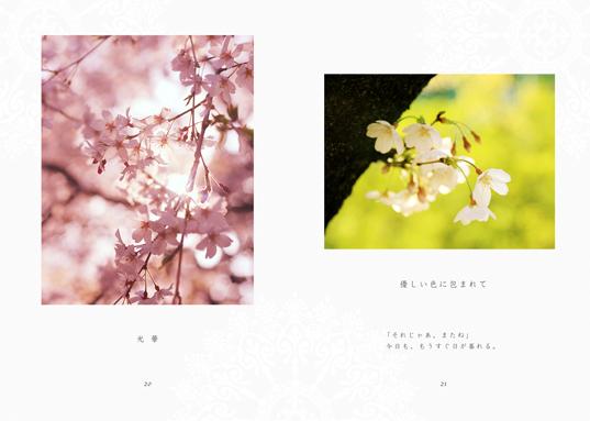 sakura-honbun04.jpg